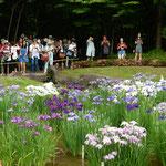 東御苑の菖蒲園では花菖蒲を楽しむ外国人の姿も多くみられました。   ・外つ国の言葉飛び交ふ菖蒲園(和良)