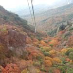 寒霞渓のロープウエイから見た下界は紅葉に埋まっていました。  ・ゴンドラの下界紅葉の大斜面(和良)