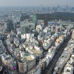 渋谷に新しくできた渋谷スカイの屋上から見た神宮の森の方面です。 ・目の下の渋谷の街に差す冬日(和良)