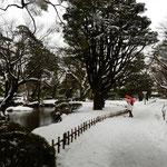 兼六園も雪化粧していました。小立野口から入りました。        ・雪積もる園に真っ赤な傘の人(和良)