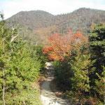 鳴門市大麻山の紅葉も盛り。登山の道は紅葉の道でもあります。  ・大麻へ登る山道紅葉道 (和良)