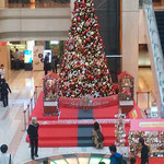 羽田空港の吹き抜けロビーの聖樹は高々と聳え立っていました。 ・吹き抜けのロビー高々聖樹立つ(和良)