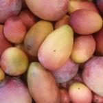 沖縄の太陽を浴びて育ったマンゴーは本当に甘かったです。       ・完熟といふマンゴーの甘さかな(和良)