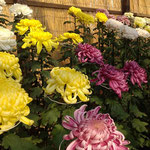 菊人形で有名な吉野川市鴨島町は菊作りをする人が多い町です。 ・饂飩屋の亭主も菊を作る町(和良)