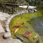 陽光の降り注ぐ高輪のホテルの庭では池の鯉もよく動いていました。 ・暖かや鯉の尾鰭のよく動く(和良)