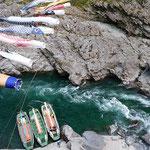 大歩危渓谷の遊覧船乗場には今年も鯉幟が泳いでいました。       ・渓谷のみどりの風に五月鯉(和良)