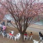 蜂須賀桜と武家屋敷の会の皆さんがお花見のお接待をしてくれました。       ・桜見てハワイアン聴き街うらら(和良)