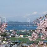 しだれ桜で有名な鳴門の花見山から海峡が見えました。         ・海峡を指呼に鳴門の花見かな(和良)