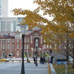 東京駅前の銀杏も散り始めていました。                                           ・改装の馴染みし駅舎銀杏散る(和良)