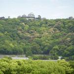 四国ホトトギス俳句大会の会場から万緑に包まれた松山城が見えました。  ・万緑や地球は水の星である(和良)