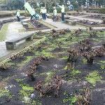 徳島城公園の薔薇園ではボランティアの方々が手入れしていました。・施肥終へし薔薇園早も草青む(和良)