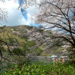上勝町の正木ダムでは桜が咲き、鶯が鳴いていました。 ・鶯の次々に鳴き迎へくれ(和良)