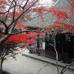 杭州の西湖湖畔の書院で見た紅葉です。赤が綺麗でした。 ・ほの暗き堂宇に紅葉明かりかな(和良)