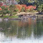 鴨の水尾が真っ直ぐに伸びて穏やかな風景でした。             ・鴨の水尾真っ直ぐに引く静寂かな(和良)