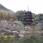 山口市にある瑠璃光寺の五重塔です。雪晴れに輝いて見えました。 ・国宝の五重塔や雪晴れて(和良)