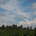 タガイタイでは見渡す限りココナツの林が続いていました。             ・雲の峰ココナツ林どこまでも(和良)