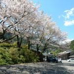 月ヶ谷温泉では河鹿を聞き鶯も聞き桜も堪能しました。  ・河鹿聞き鶯も聞き花も見て(和良)