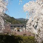 温泉に入ってしだれ桜を眺めてゆったりと過ごす人が多くいました。   ・桜見て山の出湯に入りもして(和良)
