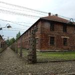 アウシュビッツ強制収容所の獄舎は今も鉄条網が張られていました。   ・鉄条網めぐらす獄舎地虫なく(和良)