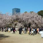 安倍総理主催の「桜を見る会」が新宿御苑で開かれ私も出席しました。  ・晴男自負の総理と桜見る(和良)