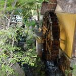 深大寺には再現した水車小屋があり新蕎麦をひくことができます。 ・江戸の世に創業の新蕎麦と(和良)