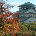 大阪の川巡りでは桜紅葉越しに大阪城も見ることができました。     ・城も見て桜紅葉もとくと見て(和良)