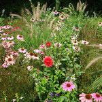 Blumenbeete entlang der Wege
