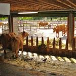 im Schau-Bauernhof