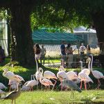 Flamingos und Reiher