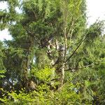 """""""...auf die Bäume, ihr Affen..."""