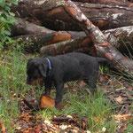 und im Wald gibts auch sooo viel zu entdecken