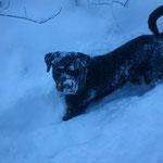 frischer Schnee das is ja was tolles