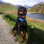 hier sind wir auf der Rückfahrt nach meinem Bestanden Eignungstest für Therapiehunde, Frauchen war soooo glücklich...