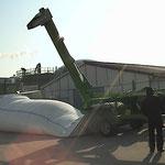 Reprise de céréales stockées en gaine souple janvier 2015