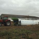 Mise en silo de blé  (juillet 2015)