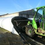 Dessilage avec fourche crocodile (vaches laitières quota de 800000 litres)