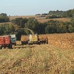 "Ensilage de maïs épis qui sera stocké avec ""RT 8000 Budissa-Bag"