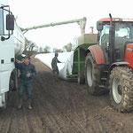 Mise en silo de maîs grain entier (oct. 2014 - humidité 27% - vendu en juin 2015)