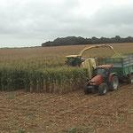 Chantier de maïs avec Krone 10 rgs