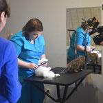 Савостикова Ирина - профессиональный заводчик кошек, специалист по подготовке кошек к выставкам