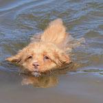 Caylie's erster Schwimmversuch