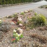 Bordesholmer LandFrauen; Brügger Verkehrsinsel im April 2020