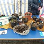 Bordesholmer Landfrauen; Pflanzenbörse im Klosterstift in Bordesholm im März 2018