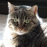 Gismo - Katze