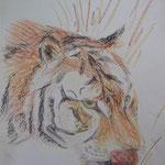 Tiger. Pastell. DIN A 3