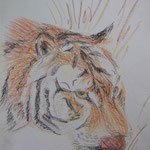 Tiger. Pastell. DIN A 3