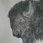 Bison. Kohle. DIN A3