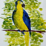 Papagei II. Acryl. 24x18