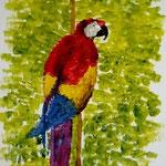 Papagei I. Acryl. 24x18
