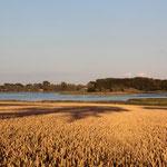 Weizenfelder auf Zudar